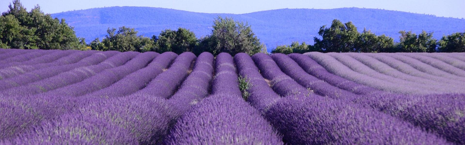 Gites de Provence