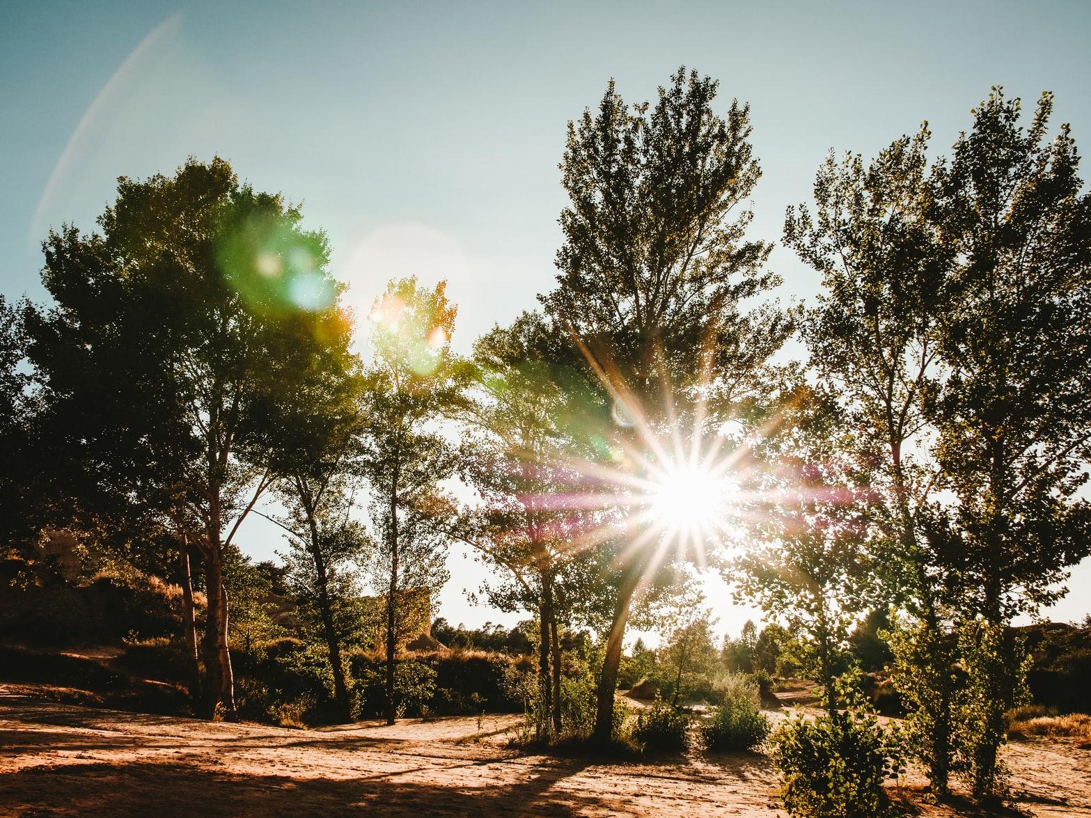 Arbres et nature dans le colorado provençal