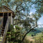 Cabane Arbres en Provence